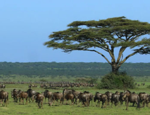 Serengeti's Place Of Plenty